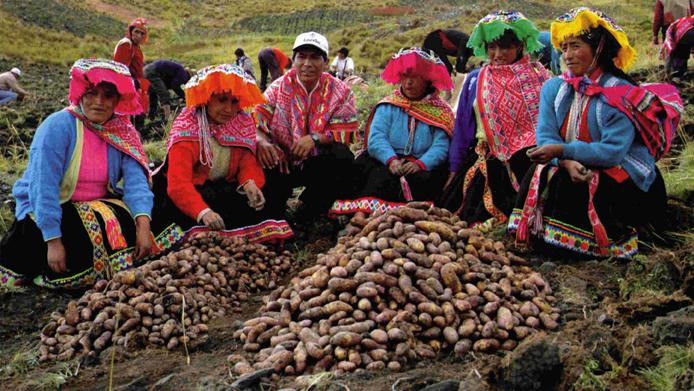 Unsere Kartoffel